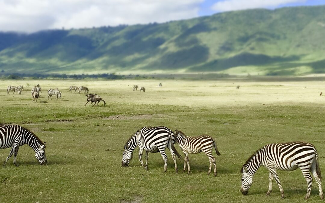Tanzania – Once in a Life Time Experience